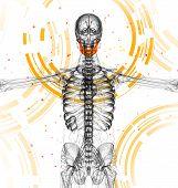 picture of jaw-bone  - 3d render medical illustration of the jaw bone  - JPG