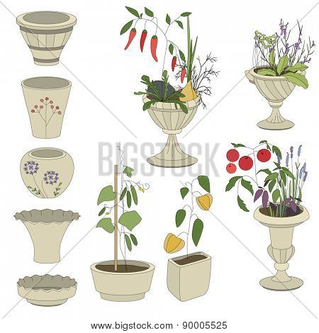 Flower pots with vegetables - herbs,tomatoes,pepper,cucumber isolated on white