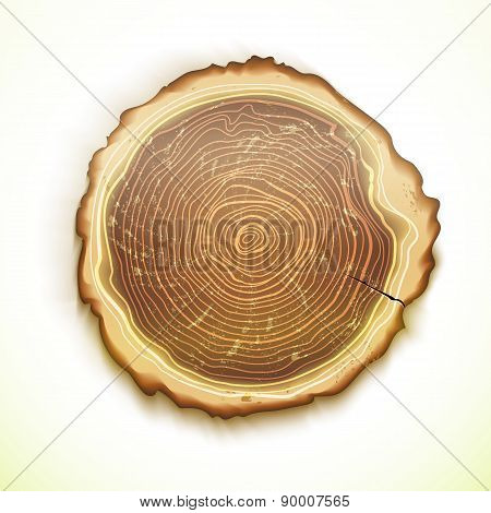 Vector Drawing Tree Stump