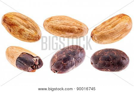 a set of raw cacao beans isolated with clipping paths