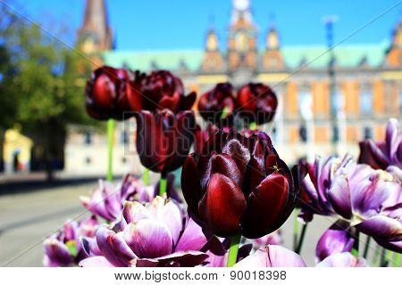 Spring In Malmo