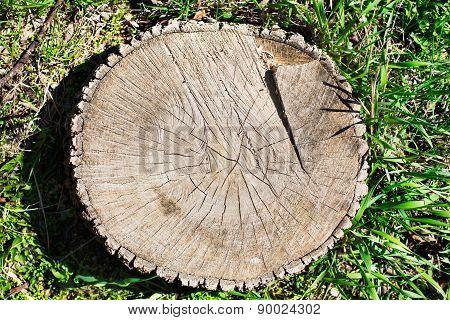Tree Rings Of Stump