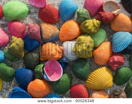 Amazing Colorful Seashells