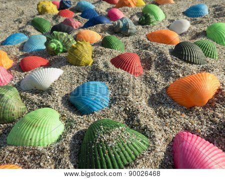 Matt Seashells In The Sand