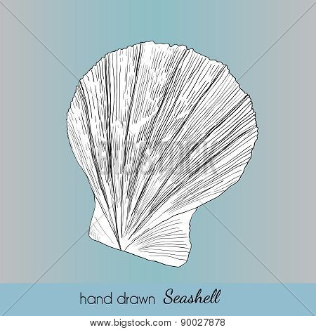 Hand Drawn Marine Seashell. Vector Illustration For Travel Card,
