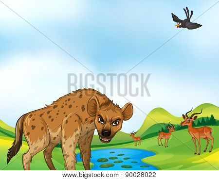 Hyena and deers around the pond at daytime
