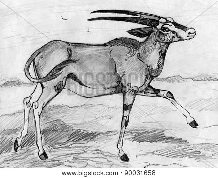 Antelope oryx