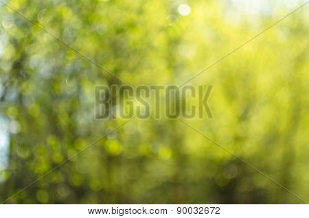 Green yellow natural background