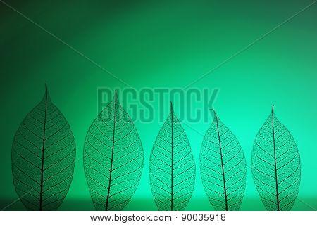 Skeleton leaves on green background, close up