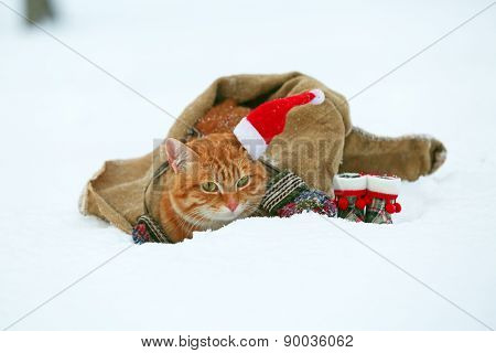 Cute red cat with Santa hat wrapped in blanket on snow background