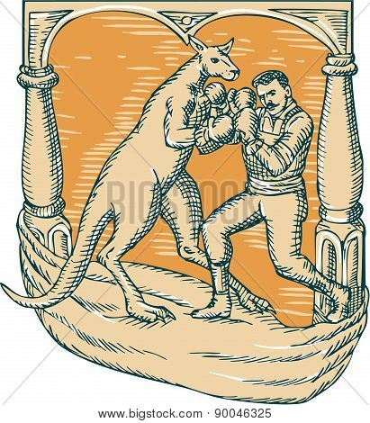 Kangaroo Boxing Man Etching