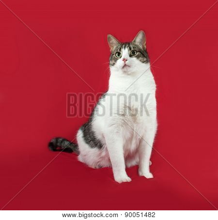 Tabby And White Cats Sitting On Red