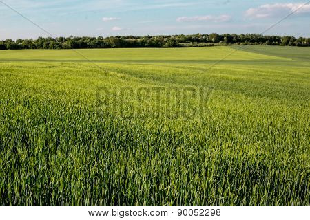 Green Lush Meadows Landscape