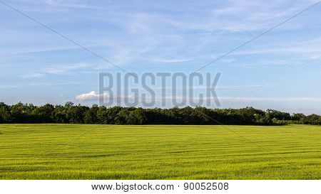 Green Meadows And Blue Sky
