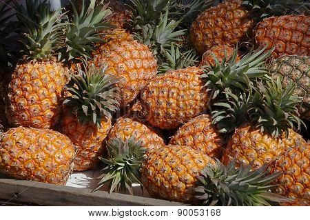 Fresh Ripe Pineapples For Sale
