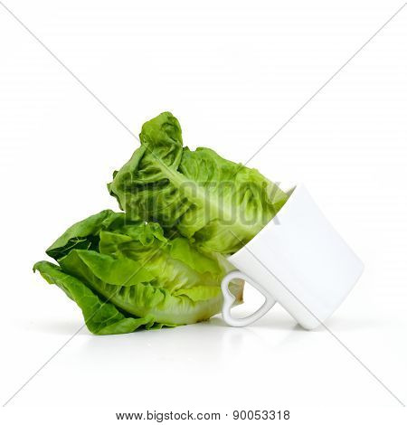 Baby Cos Lettuce Put In Beautiful Cup Isolate On White