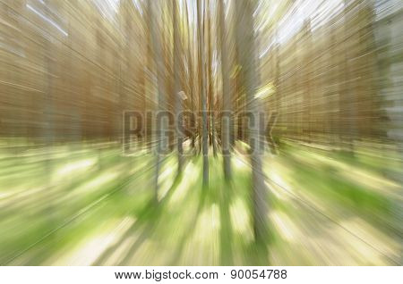 Trees Zoom-in. Movement Concept
