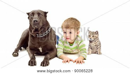 Dog Staffordshire Terrier, boy and kitten Scottish Straight
