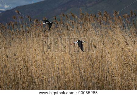 Stilt On Lake Prespa, Greece