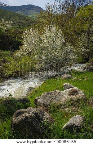 Torrent Of Rapids Near Lake Prespa, Greece