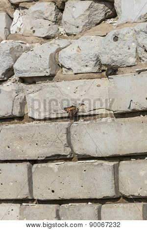 Image Fragment Of The Old Shattered Brick Walls, On Which Sits A Butterfly