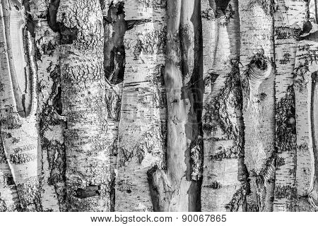Birch Timber Planks And Sunlight