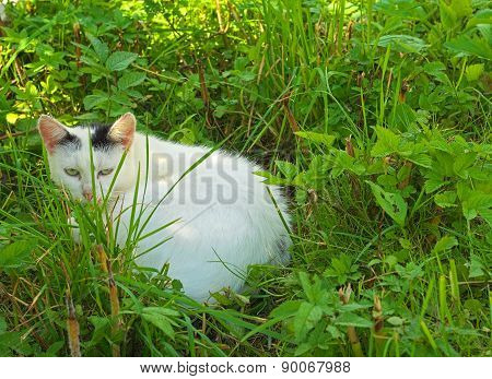 White Kitty Sitting And Hiding