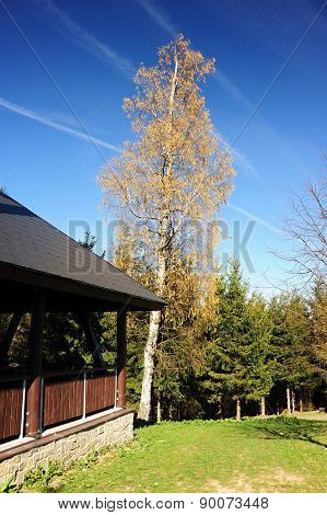 Tree And Wooden Shed