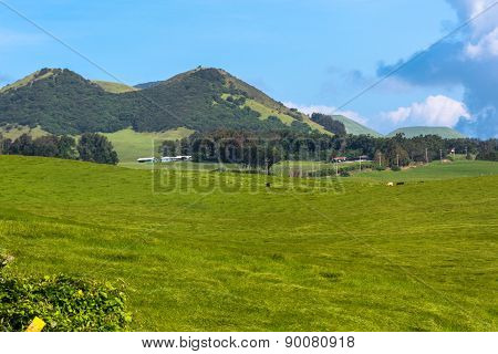 Fields along Kohala Mountain Road, Hawaii
