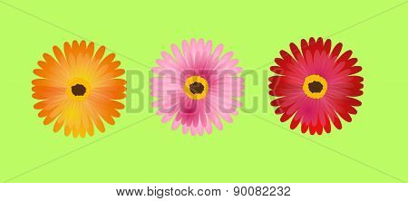 Three Gerbera
