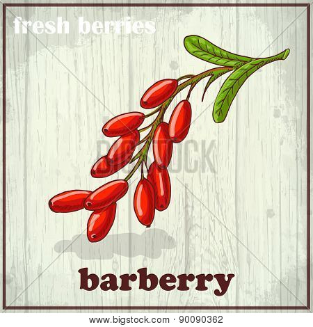 Hand Drawing Illustration Of Barberry. Fresh Berries Sketch Background