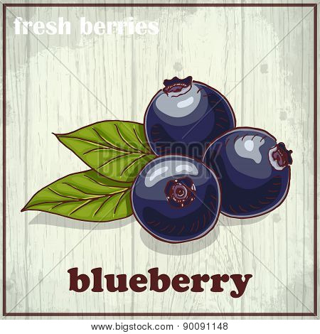 Hand Drawing Illustration Of Blueberry. Fresh Berries Sketch Background