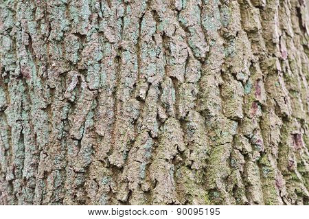 Tree bark for background purposes