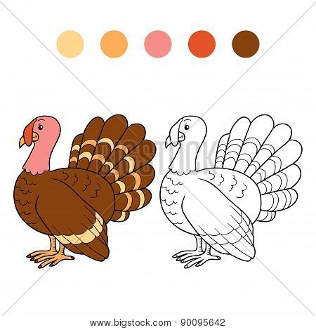 Coloring Book (turkey)