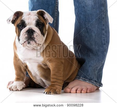 woman with new puppy at her feet on white background