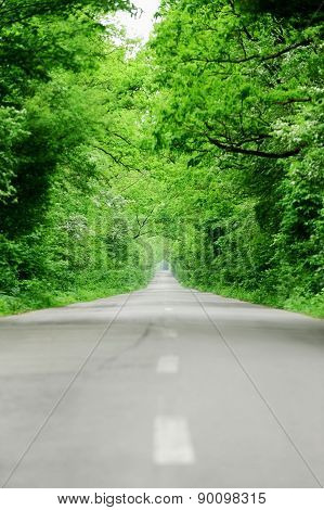Empty Road Through The Forest