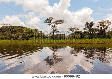 A Glimpse Into Cuyabeno Wildlife Reserve, Sucumbios Province, Sunny Day In The Amazonian Jungle