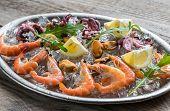 foto of octopus  - Shrimps - JPG