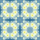 foto of mandelbrot  - Fractal floral pattern texture with blue background - JPG