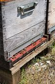 image of bee-hive  - Many bee hives outdoor - JPG