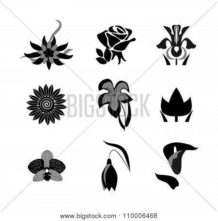 The Flowers Set Black