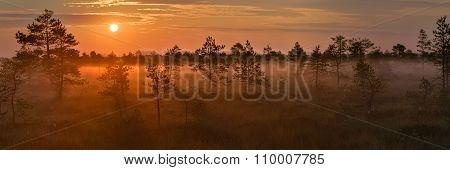 Sunrise in the bog