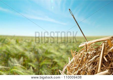 Needle in a Haystack.