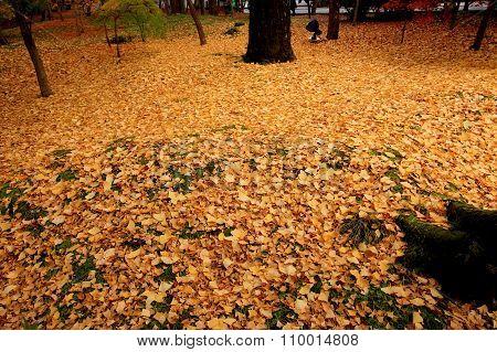 Ginkgo carpet