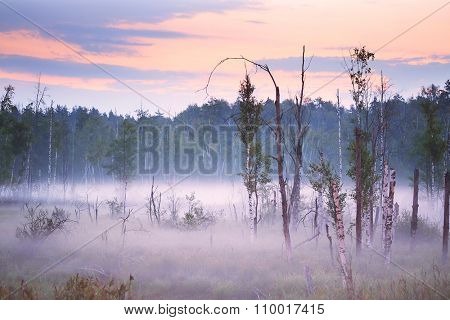 the image of a panorama of the morning mist on the lake in the woods