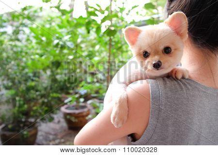 Girl Holding Cute Pomeranian Dog On Her Shoulder