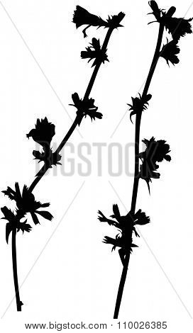 illustration with wild flower silhouette isolated on white background