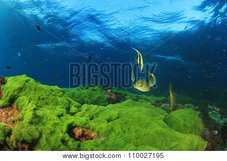Green seaweed blue water and fish
