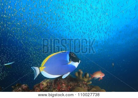 Coral reef and tropical fish underwater in sea ocean