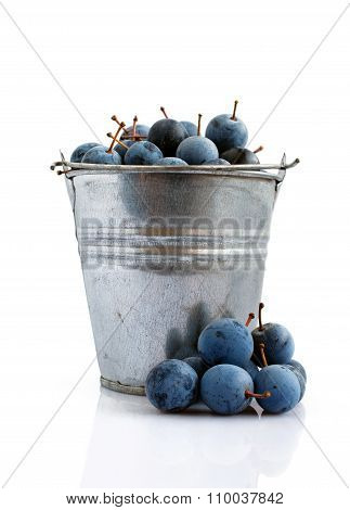 Blackthorn In A Bucket